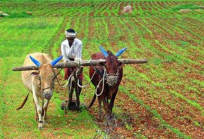 .nashik farmer, narendra modi, onion prices,