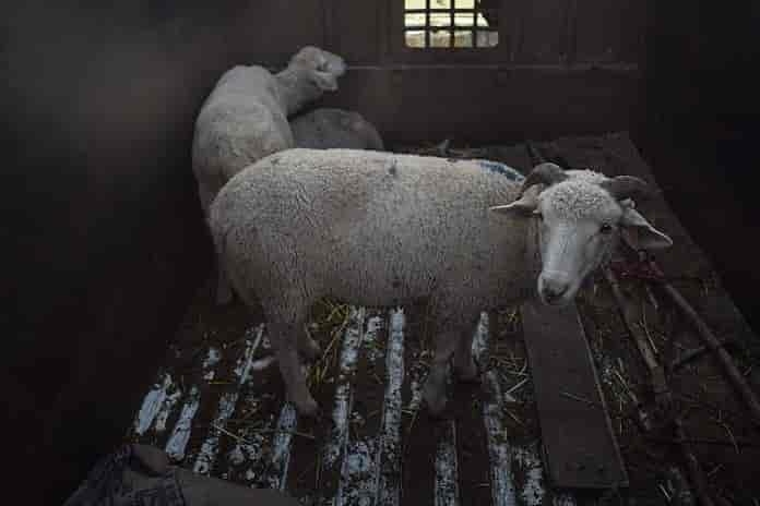 Kashmir, Animals, Bhat Burhan